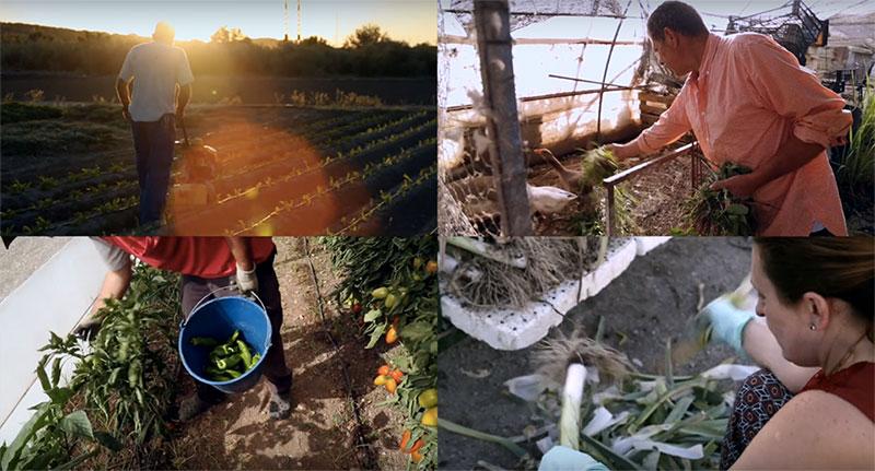 Fotograma del vídeo Redes Alimentarias Sostenibles en Andalucía. Integrante del proyecto BioCor
